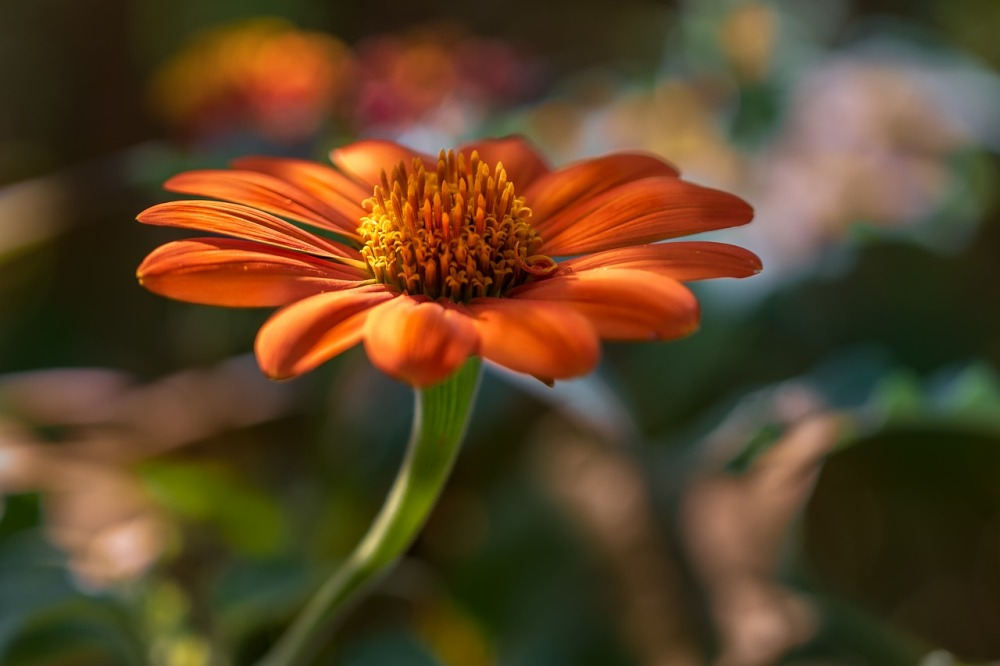 orange flower2