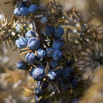 salt_scrub_juniperberries